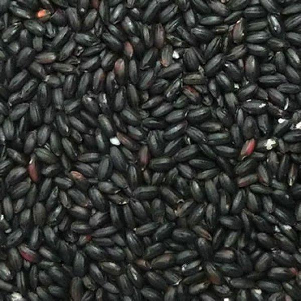 画像1: 古代米 黒米 30kg (30年産 山梨県/秋田県産)長期保存包装済み (1)